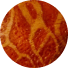 wurzelkoralle